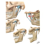 Temporomandibular Joint
