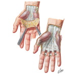 Skin and Subcutaneous Fascia of the Hand