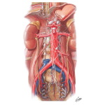 Autonomic Nerves and Ganglia of Abdomen