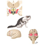 Hypothalamic Mechanisms in Some Aspects of Emotional Behavior