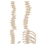 Congenital Scoliosis: Closed types