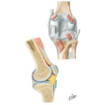 Right Knee: Posterior and Sagittal Views