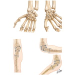 Movements at Wrist Joint
