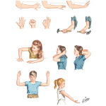 Exercises for the Upper Extremities