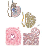 Testis, Epididymis and Vas Deferens