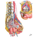 Illustration of Innervation of Internal Genitalia Nerves of Pelvic Viscera: Female from the Netter Collection