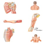 Neuropathy About Shoulder