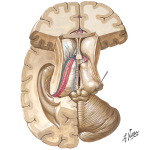 Thalamic Anatomy