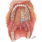 Oral Cavity: Mouth and Palate