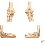 Bones of Right Elbow Joint