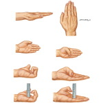Measurement of Wrist Motion and Finger Motion, Lack of Finger Flexion, and Thumb Opposition