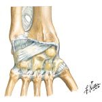 Posterior Ligaments of Wrist