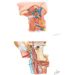 Anterior Triangle: Carotid Triangle