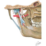 Sensory Innervation of the Temporomandibular Joint
