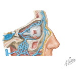 Vascular Supply of the Pterygopalatine Fossa