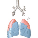 Chest Surgery In Tuberculosis