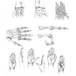 Wrist and Finger Joints and Movements