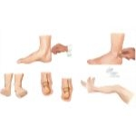 Physical Examination of the Foot and Ankle