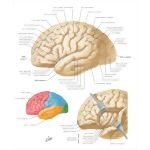 The Cerebellum: From Structure to Control, Volume 114