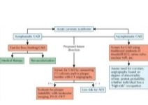 Illustration of Algorithm for Differential Diagnosis of Acute Coronary Syndrome (ACS) from the Netter Collection