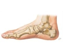 Cross Section Reference Ankle: Axial - Coronal