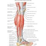 Back exercises for sciatica pdf