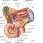 Anatomy Atlas 6E image