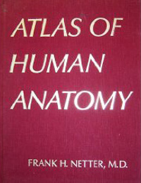 Anatomy Atlas - 1E...