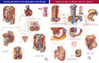 Chart - Vascular Supply of GI Tract