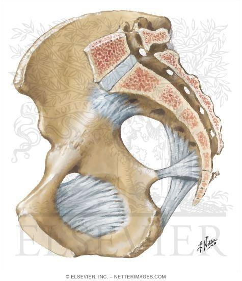 Female Pelvic Anatomy ...