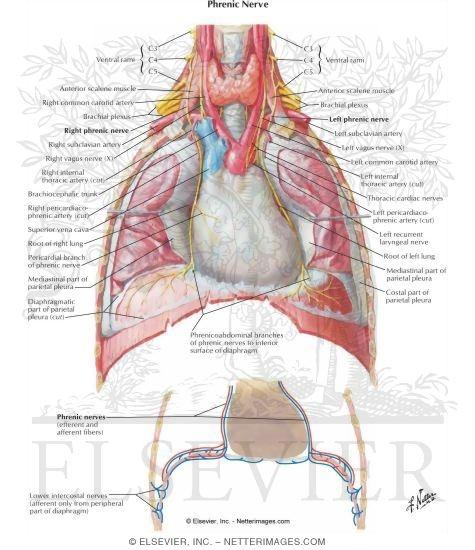 Netter Interactive Atlas Of Human Anatomy Respiratory Edition