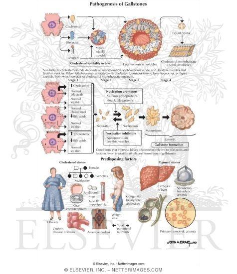 adrenal glands vitamin therapy