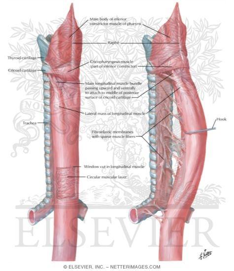 most common liver disease symptoms
