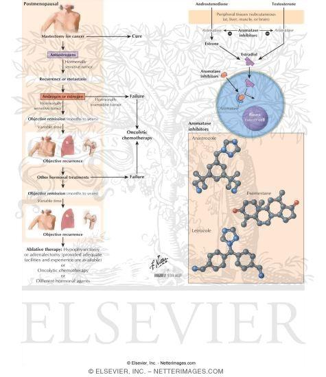 What Are Aromatase Inhibitors photo