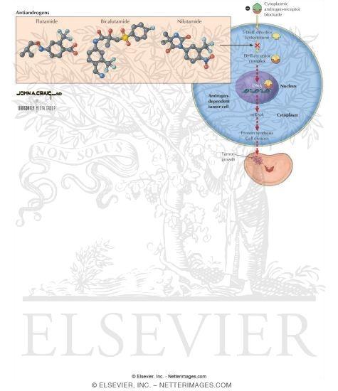 Antiandrogens: Flutamide, Bicalutamide, and Nilutamide