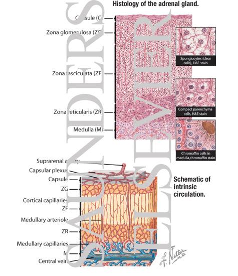 pancreas cancer photos