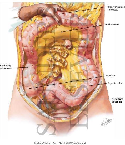 no ibs symptoms during pregnancy