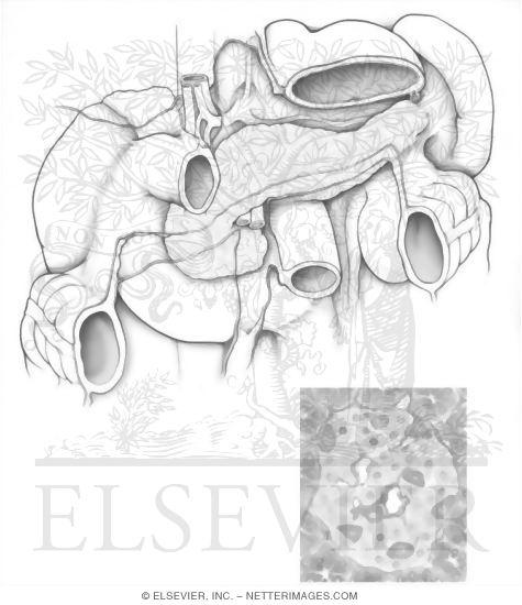 free coloring pages of endocrine unit. Black Bedroom Furniture Sets. Home Design Ideas