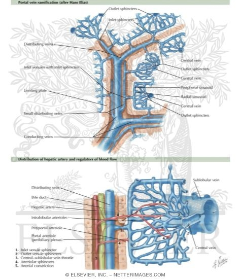 excretory system diseases. excretory system diseases.