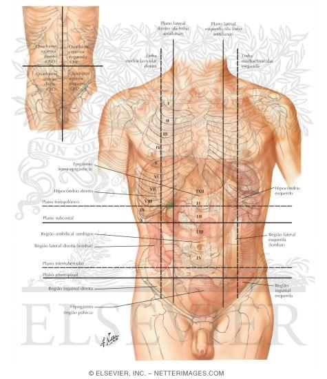 органы внизу поясницы